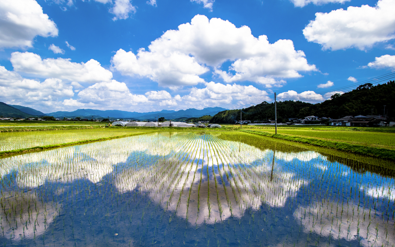 熊本県菊池市水田